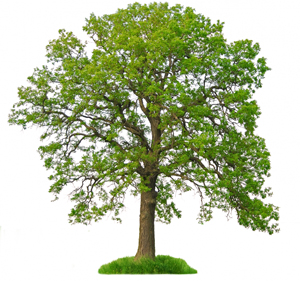 Træaffald